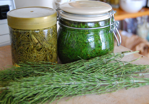 horsetail-preparations.jpg