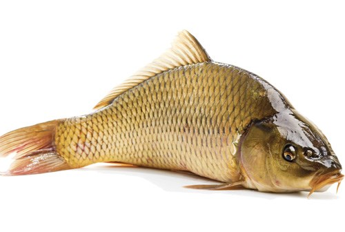 Vảy cá chép dùng chế biến món ăn phù hợp với người mắc ung thư cổ tử cung - Ảnh: Shutterstock