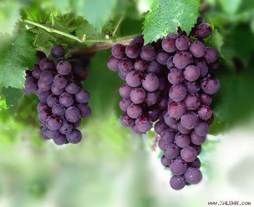 9 loại trái cây mùa hè tốt cho mẹ bầu