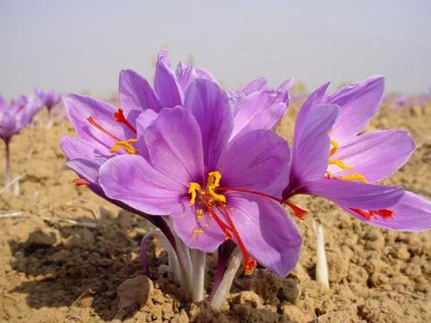 Tác dụng tuyệt vời từ những loài hoa ăn được