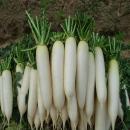 Lợi ích sức khỏe của củ cải