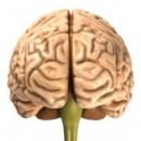 3 loại thuốc bổ não tốt nhất hiện nay