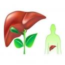5 dấu hiệu cho thấy gan của bạn đang bị nhiễm độc
