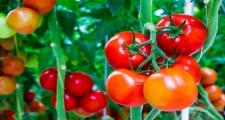 5 thực phẩm giúp giảm cân nhanh chóng hiệu quả
