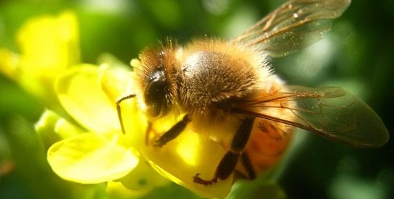 Cách làm đẹp da với sữa ong chúa