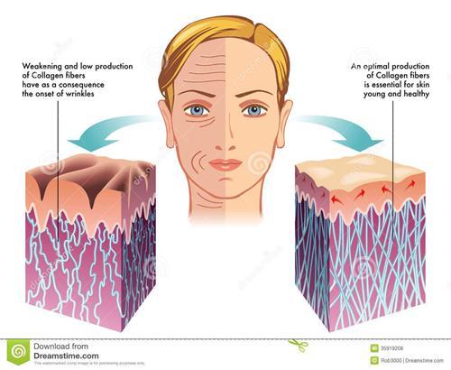 Cộng dụng của Collagen trong việc trẻ hóa làn da