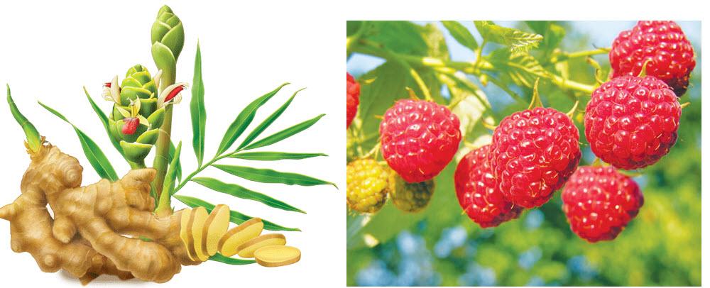 Rainbow Light gồm những vitamin thiết yếu chiết xuất từ cây mâm xôi đỏ và gừng