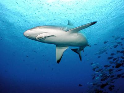 Gnc natural brand shark cartilage 750 mg - viên uống bổ xương vi sụn cá mập 180 viên
