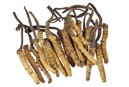 Cordyceps kala health - trùng thảo chay giúp tăng sức bền, tràn Đầy sức sống và năng lượng 90 viên