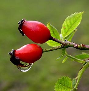 Thảo quả hoa hồng cung cấp Vitamin C tự nhiên
