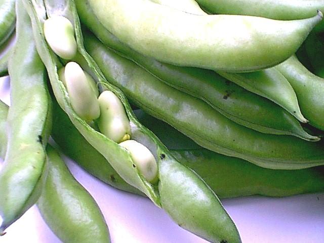 Đậu fava là thực phẩm chứa nhiều Genistein