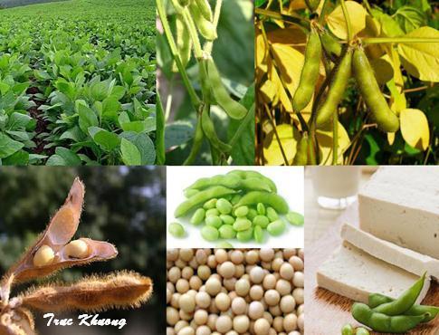 Đậu nành và các thực phẩm có nguồn gốc đậu nành giúp cơ thể tự sản sinh collagen