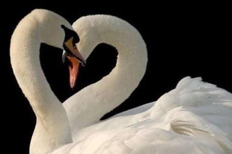 Tình yêu cho bạn sự thăng hoa và khoái cảm tình dục