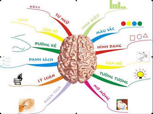 Những yếu tố kích thích bộ não người