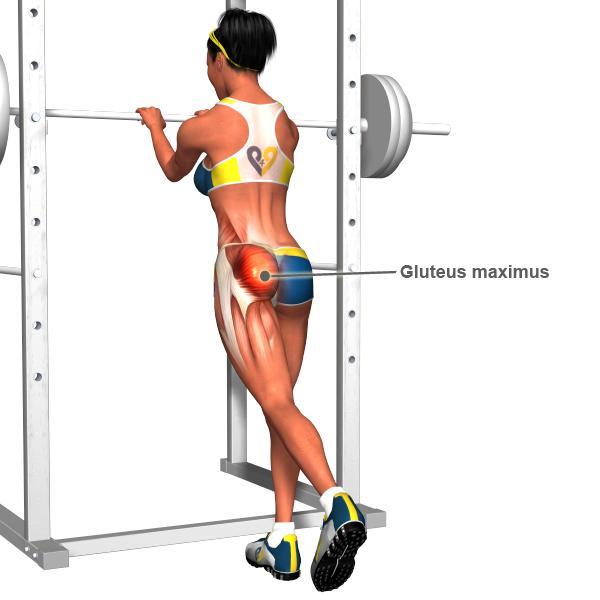 Cấu trúc cơ mông ở nữ giới