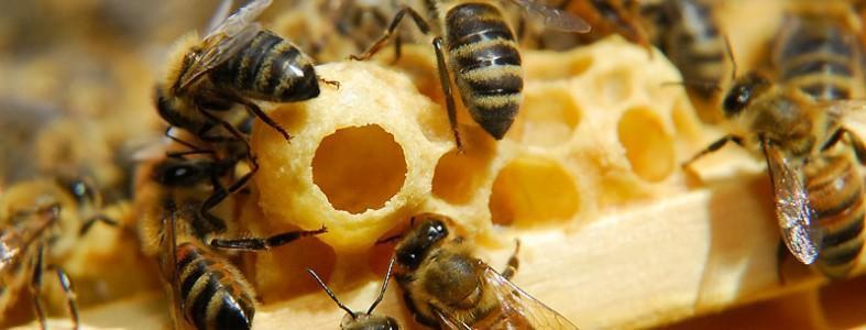 Sữa ong chúa royal jelly costar 1610mg – bồi bổ sức khỏe, làm đẹp da, tăng cường sinh lực, 365 viên