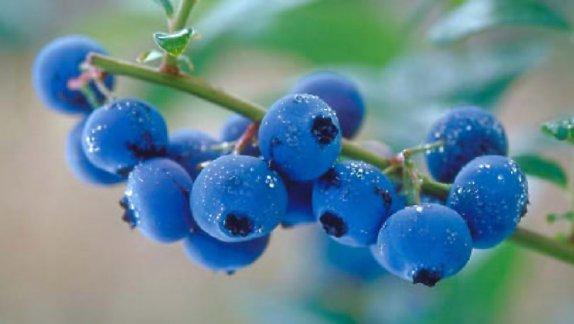 Azo cranberry – viên uống hỗ trợ điều trị bệnh bàng quang và tiết niệu, 50 viên