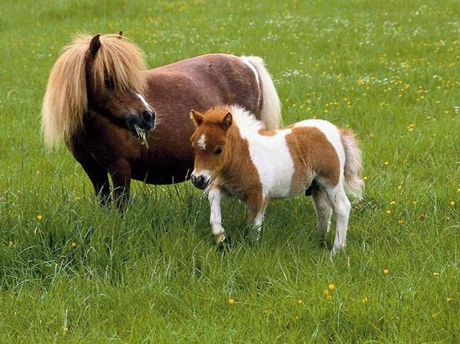 Nhau thai ngựa chứa nhiều dưỡng chất làm trắng da