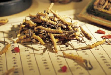 Thuốc đông trùng hạ thảo có công dụng chữa bệnh gì?