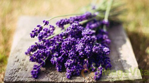 Sữa tắm dưỡng ẩm hoa oải hương - natural healing moisture lavender body shower. v