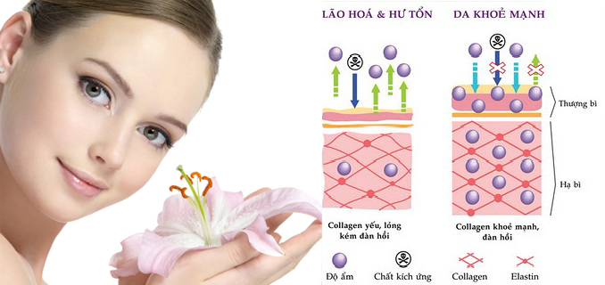 Collagen biovea