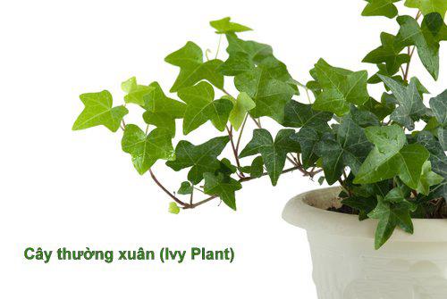 Flordis prospan infant drops, 20ml - Úc: tinh chất cây thường xuân giảm ho, tiêu đờm, cải thiện viêm phế quản
